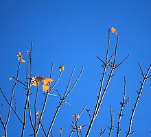 Mt Tomah, last leaf, almost by Debra Hannan