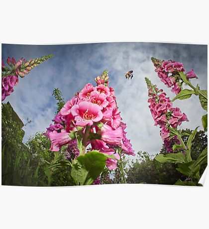 Foxgloves and Bee at Great Dixter House Poster
