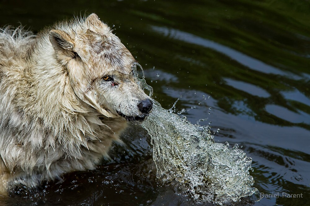 Wet & Wild  by Daniel  Parent