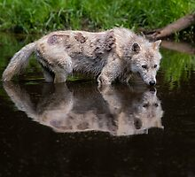 Time to reflect by Daniel  Parent
