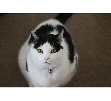 Mr Smudge Photographic Print