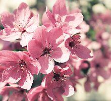 Blossom by Caroline Fournier