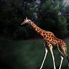 giraffe by Graham Dean