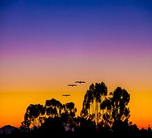 Osibisa Dawn by Chris Lord