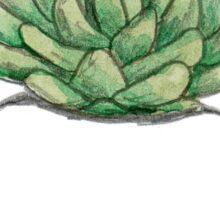 Succulent in Plump White Planter Sticker