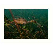 Taming the Weedy Sea Dragon #2 Art Print