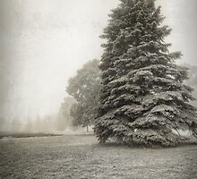 The Misty Pines by Bendinglife
