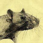 Rat 3 by freeminds