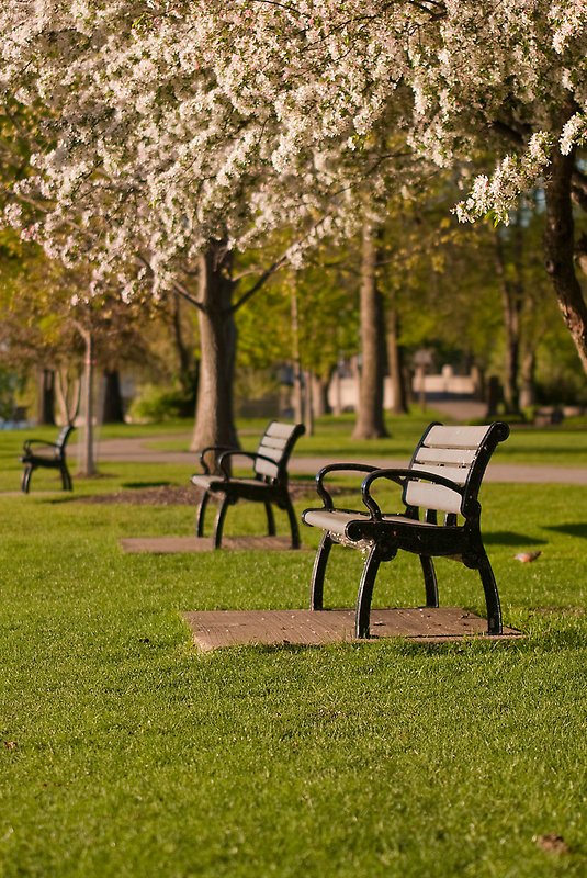 Empty Seats in Spring by Scott Lewis