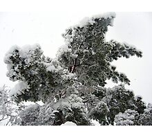 Heavy Spring Snowstorm Photographic Print
