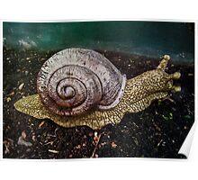 snailadeesnail Poster