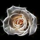 Rose of Light by Bel Menpes