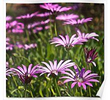 Purple & White Poster