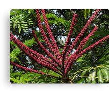 Jungle's Colours - Colores De La Selva Canvas Print