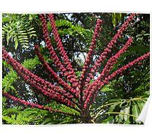 Jungle's Colours - Colores De La Selva Poster