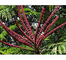 Jungle's Colours - Colores De La Selva Photographic Print