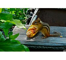 CHIPPY WITH CORNCOB Photographic Print