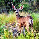 Oh Deer! by Barbara Manis