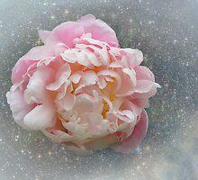 Pastel Peony by Carol Bleasdale