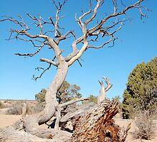 Fallen Tree by Nicole  Markmann Nelson