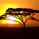 Sunrise over Serengeti by Michal Cerny