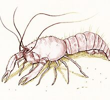 The Enigmatic Lobster by Sophie Corrigan
