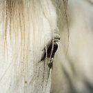 Behind the Veil by KBritt
