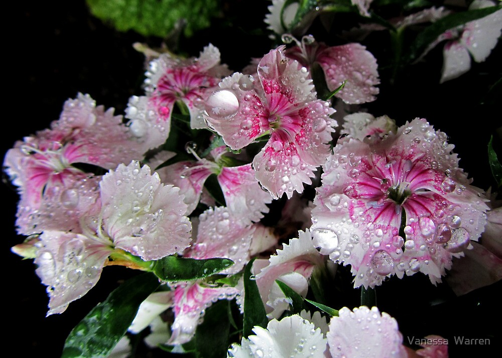 Raindrops in PINK & WHITE  by Vanessa  Warren