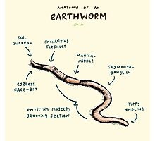 Anatomy of an Earthworm Photographic Print