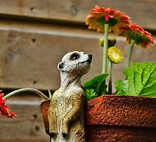 Watching The Flowers Grow :) by Susie Peek