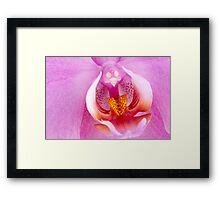 Beautiful pink orchid Framed Print