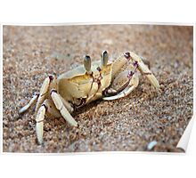 Ghost Crab Poster