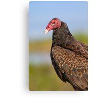 Friendly Turkey Vulture. Canvas Print