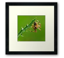 who has more stab? Framed Print