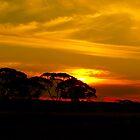 Golden Glow!! by Toucan79