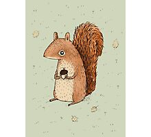 Sarah the Squirrel Photographic Print