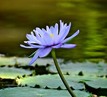 Beauty on the pond by Renee Hubbard Fine Art Photography