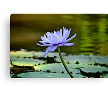 Beauty on the pond Canvas Print