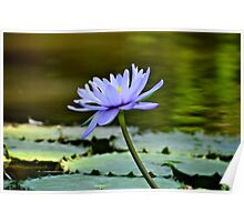 Beauty on the pond Poster