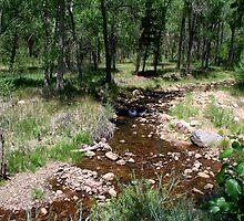 Beaver Creek by Margot Ardourel