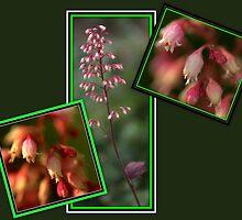 Beauty in the little things............ by Larry Llewellyn