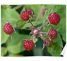 Wild Rasberries Poster