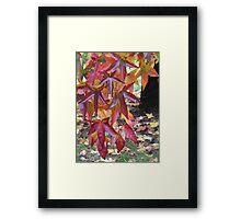 Autumn Bouquet - Marysville, Victoria Framed Print