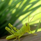 Grasshopper by Sandy Edgar