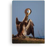 Australian Darter Canvas Print