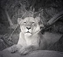 African Queen by Leanne Allen