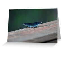 Beautiful Blue Butterfly Greeting Card