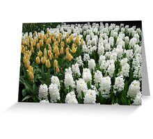 Goldilocks and Snow Whites - Tulips and Hyacinths Greeting Card