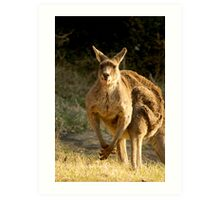 Goofy Kangaroo with it's tongue out Art Print