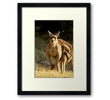 Goofy Kangaroo with it's tongue out Framed Print